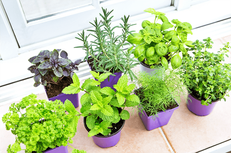 Best Vegetables To Grow Indoors In 2020